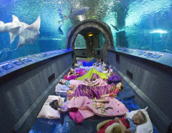 monterey bay aquarium overnight