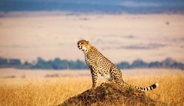 safari parks,safari parks in africa,africa ,सफारी पार्क, अफ्रीका, अफ्रीका के सफारी पार्क, युगांडा, नेशनल पार्क, बच्चों की पसंदीदा जगहें