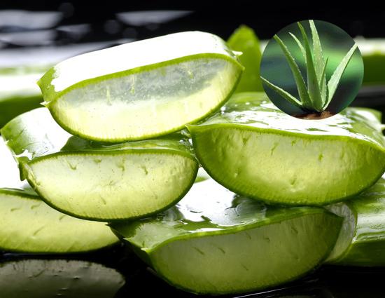health tips in hindi,benefits of aloevera,aloevera,aloevera tips