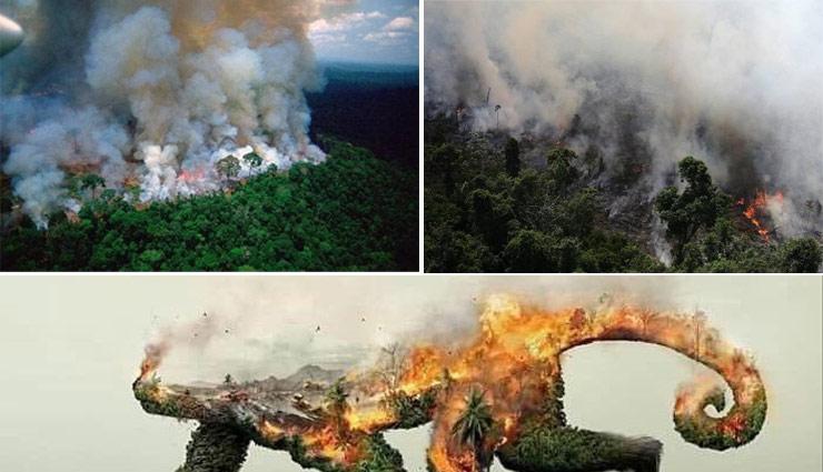 अमेजन : खतरे में धरती, करीब 2 हफ्ते से जल रहा है दुनिया का सबसे बड़ा जंगल PHOTOS