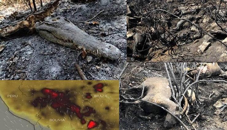 amazon,forest,brazil,fire,animals,death,devastation,media,fire in amazon,news,news in hindi ,अमेजन, जंगल, ब्राजील, आग, जीव, जंतु, मौत, तबाही, मीडिया