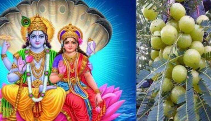 astrology tips,astrology tips in hindi,astrology measures,amla remedies ,ज्योतिष टिप्स, ज्योतिष टिप्स हिंदी में, ज्योतिषीय उपाय, आंवले के उपाय