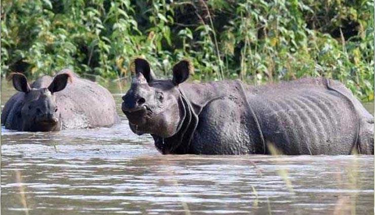 assam,flood,brahmaputra river,kaziranga national park ,असम में बाढ़, असम बाढ़ 2019, पीएम मोदी