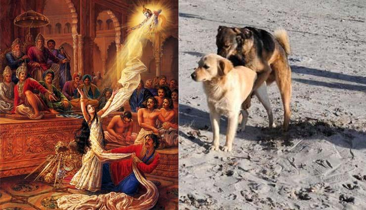 एक श्राप की वजह से संभोग के बाद भी जुड़े रहते हैं कुत्ते, महाभारत से जुड़ी है इसकी पौराणिक कथा