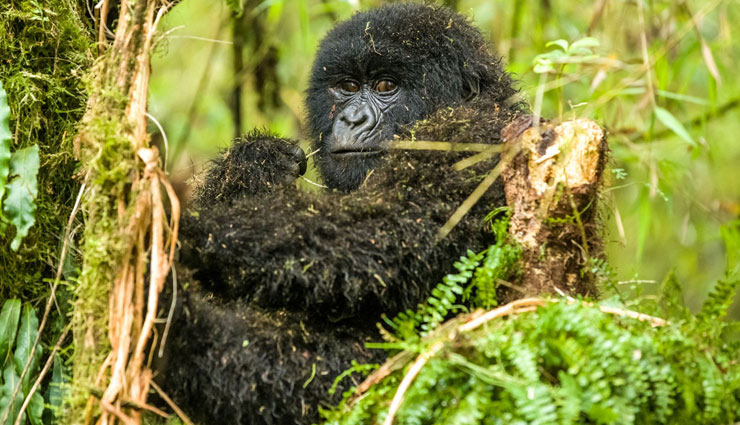 5 Attractions of Rwanda You Cannot Miss To Visit