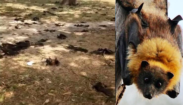 गोरखपुर में 300 चमगादड़ मरे, लोगों में दहशत