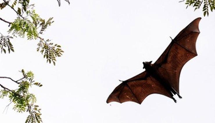 weird village,village in india where bats are worshiped,bihar,sarsai village