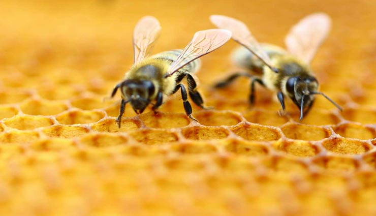 एक सैंकेड में 183 बार अपना पंख फड़फड़ाती है मधुमक्खी, जानें इससे जुड़े रोचक तथ्यों के बारे में