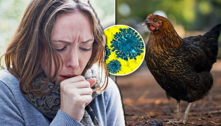bird flu,bird flu symptoms,bird flu risk,bird flu causes,about bird flu,health news ,बर्ड फ्लू