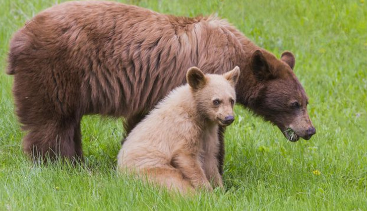 5 Places To Spot Black and Brown Bear Across India