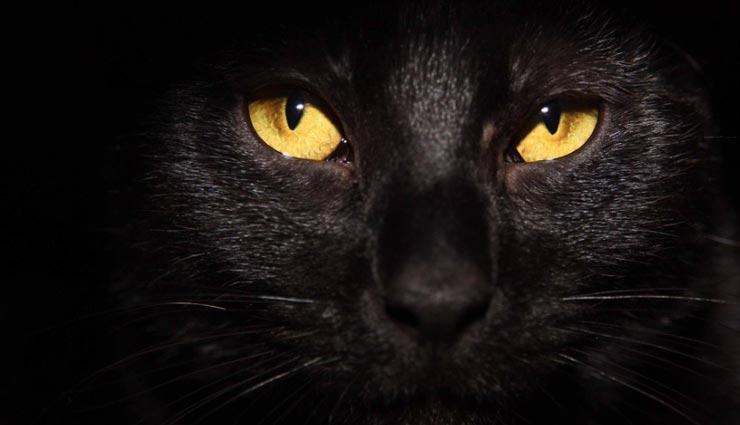 बिल्ली अपने साथ लेकर आती है नकारात्मकता, जानें इससे जुड़े संकेतों के बारे में
