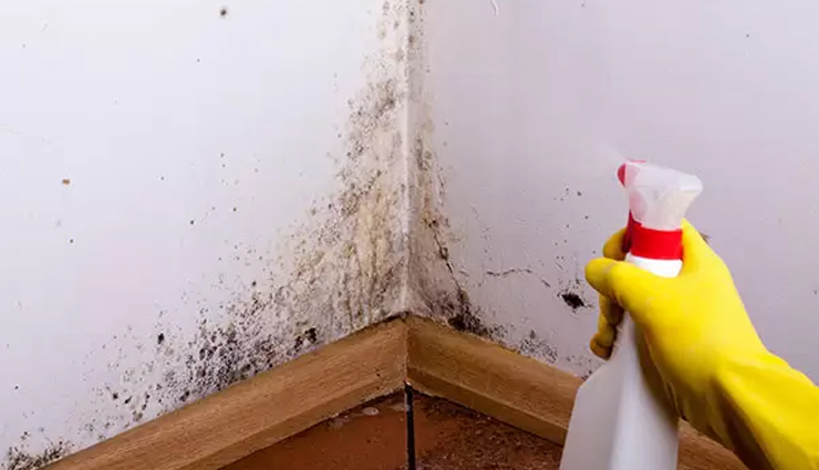 6 Effective Home Remedies To Get Rid of Black Mold From Walls