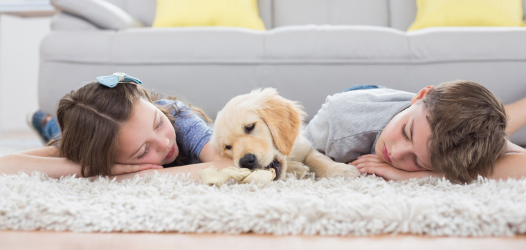 carpet cleaning tips,tips to clean carpet,household tips,cleaning carpet