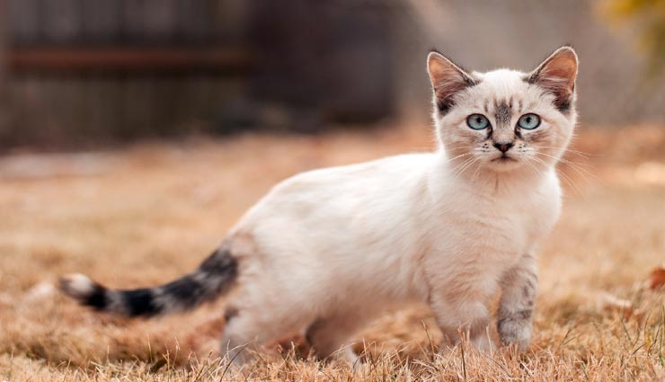 amazing facts,facts of cat,surprising facts,facts,cats ,रोचक तथ्य, बिल्ली के रोचक तथ्य, बिल्ली से जुड़े फैक्ट्स, बिल्लियाँ