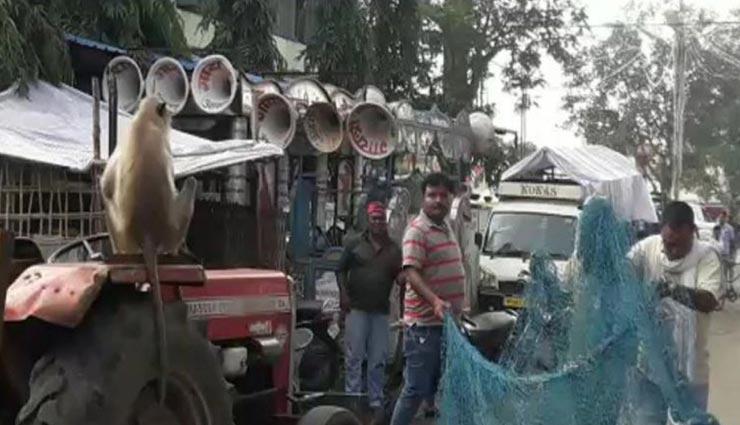 weird news,weird incident,baboon in mp,police,baitool ,अनोखी खबर, अनोखी घटना, मध्य प्रदेश का बैतूल, लंगूर क आतंक