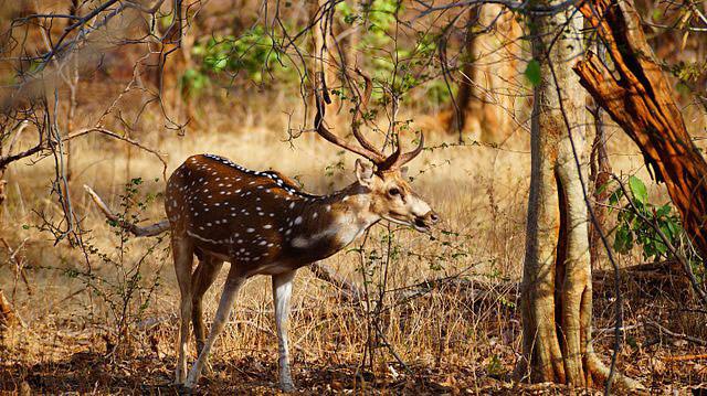 national parks of chhattisgarh,chhattisgarh,national parks ,पर्यटन स्थल, छुट्टियों का मजा, छत्तीसगढ़, छत्तीसगढ़ के नेशनल पार्क, नेशनल पार्क, रोमांच से भरपूर जगह