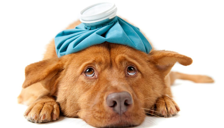 5 Common Diseases That Dogs Suffer