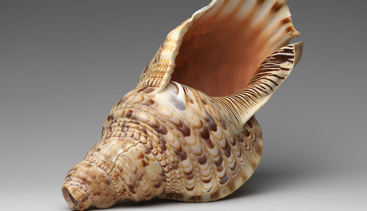facts about conch shell,facts about shankh,shankh,weird facts