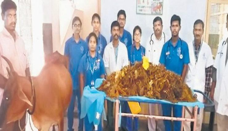 तमिलनाडु : गाय के पेट से 52 किलो प्लास्टिक निकाली, 5 घंटे चली सर्जरी