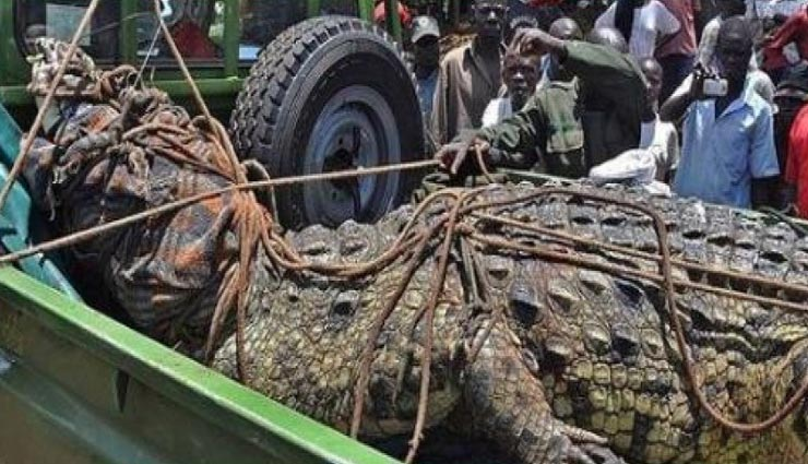 weird news,weird incident,crocodile,osama bin laden,ugandan