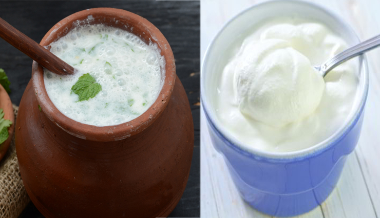 curd,watermelon,5 best cooling foods for hot summers,summer foods,summer special,coconut water,cucumber,mint,water level,dehydration,vitamins,minerals