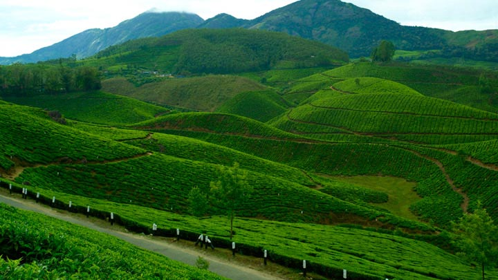 devikulam,munnar,hill station,travel,holidays,kerala ,देवीकुलम,केरल,मुन्नार