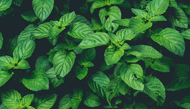 gymnema sylvestre,fenugreek seed,holy basil leaf,cinnamon,bitter gourd,home remedies,home remedies  for diabetes,Health tips,fitness tips