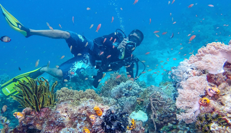 10 Best Places in The World To Go for Diving