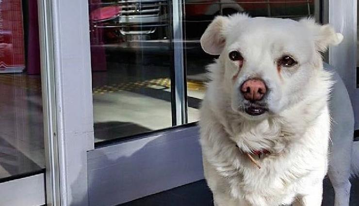 मालिक का अस्पताल में चल रहा था इलाज, 6 दिनों तक बाहर इंतज़ार करता रहा कुत्ता