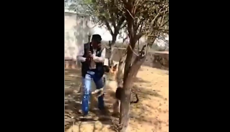 पेड़ काट रहा था शख्स, तभी कुत्ते  ने किया कुछ ऐसा... Video सोशल मीडिया पर हुआ वायरल