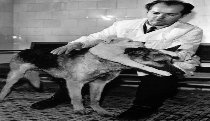 two headed dog,scientist,scientist invention,weird invention ,दौ सर वाला कुत्ता, पागल वैज्ञानिक, वैज्ञानिक का अनोखा प्रयोग, वैज्ञानिक व्लादिमीर पेत्रोविच