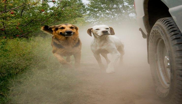 dogs,dogs weird habits,dogs run behind vehicles,reason behind dogs habit ,कुत्ते, कुत्तों की अनोखी आदत, गाड़ियों के पीछे कुत्तों का भागना, कुत्तों की अनोखी आदत का कारण