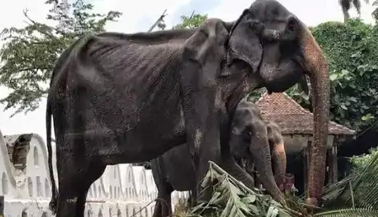 sri lanka,elephant,social media,photo viral,weird news,weird  news in hindi,omg ,श्रीलंका, हाथी, सोशल मीडिया, फोटो वायरल
