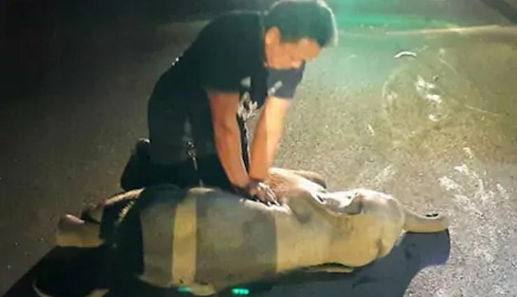 बाइक से टक्कर के बाद बुरी तरह घायल हुआ हाथी का बच्चा, शख्स ने ऐसे बचाई जान, वीडियो वायरल