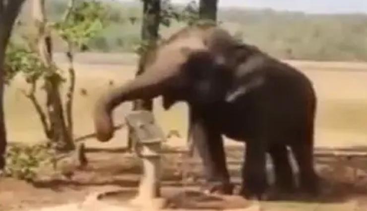 VIDEO: प्यासे हाथी ने हैंडपंप के पास पहुंच कर किया ये काम, देख हैरान रह जाएंगे आप