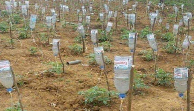 इस किसान ने आजमाया अनोखा तरीका, ग्लूकोज की खाली बोतलों से खेती करके हो रही लाखों की कमाई
