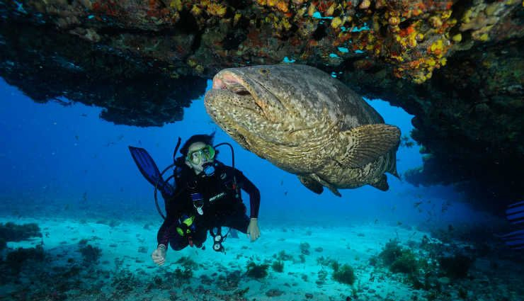 diving,best places to go for diving,diving tips,places for diving,travel,holidays,travel guide