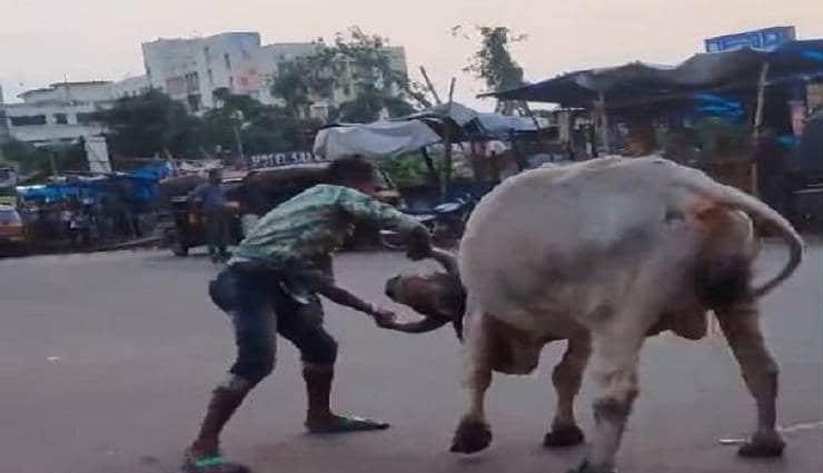 weird news in hindi,man,bull,man bull fight,road,bahubali ,अजब गजब खबरे हिंदी में