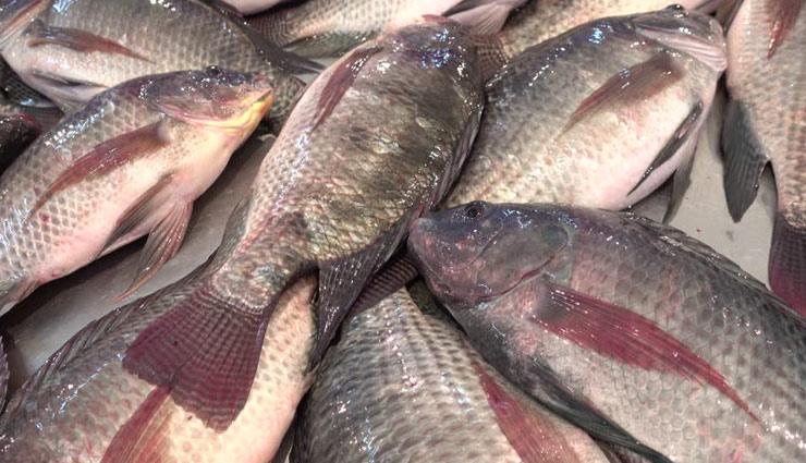 Health tips,benefits of fish,fish,benefits,Health, ,मछली, मछली के फायदे, हेल्थ टिप्स, अच्छा स्वास्थ्य