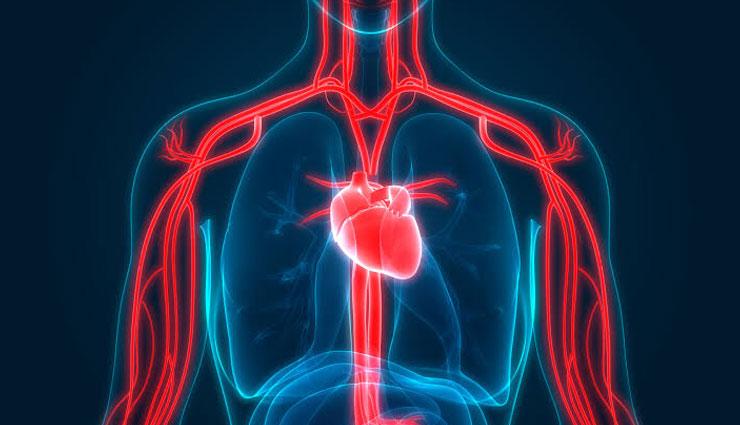 5 Food To Help You Improve Blood Circulation