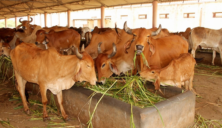 importance of cow in hindu religion,cow milk,tetis koti devta