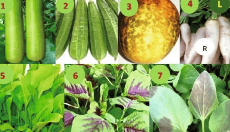 5 Most Popular Gourd Vegetables Grown in India