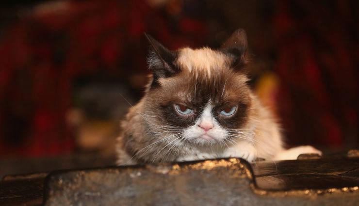 700 करोड़ रु. की मालकिन बिल्ली की हुई मौत, सोशल मीडिया पर शोक की लहर