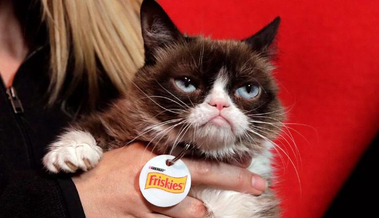 grumpy cat,grumpy cat dies,weird story ,बिल्ली ग्रुंपी की मौत