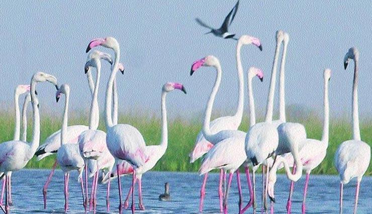 पक्षी प्रेमियों के लिए जन्नत है गुजरात की ये बर्ड सेंचुरी, बार-बार जाने का करेगा मन