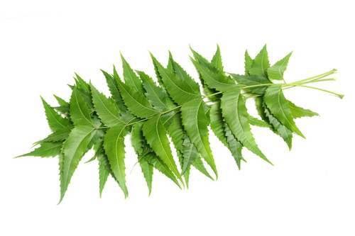 hair loss,home remedies for hair loss,herbs for hair loss,home remedies,hair care tips,beauty tips