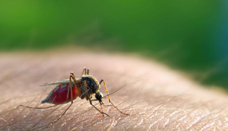 VIDEO- 5 Home Remedies To Treat Malaria