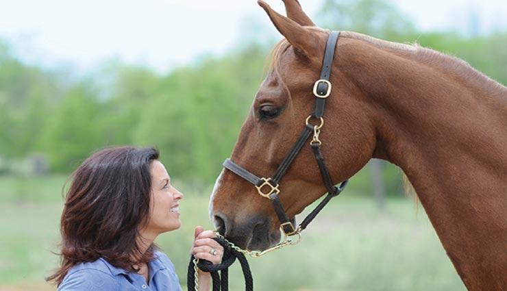 यहां कोरोना से बचने के लिए ली जा रही घोड़े को दी जाने वाली दवा, जानें इसके पीछे का कारण