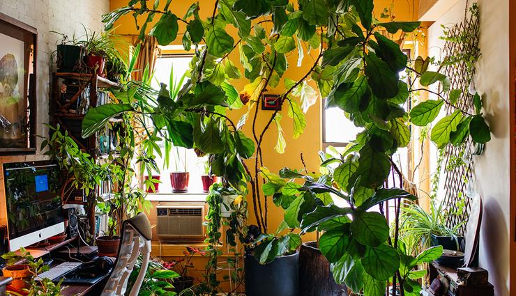 plants care tips,summers plants care tips,summers tips,household tips