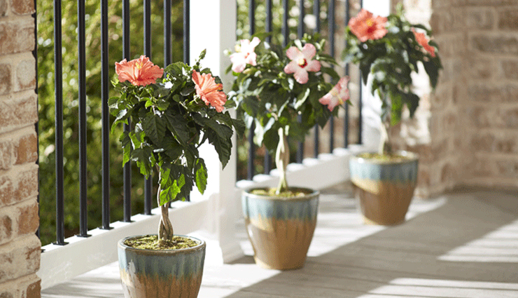 5 Tips to Keep Plants Safe During Summers